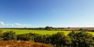 Mening over grote groene rijstaanplanting in Santerem, Setubal, Portugal Royalty-vrije Stock Afbeeldingen