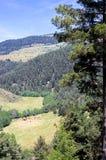 Mening over het weiland van de koeien in de bergen Stock Afbeeldingen