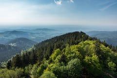 Mening over het zwarte bos Stock Foto