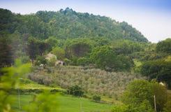 Mening over mediterrane wijngaard Royalty-vrije Stock Foto's