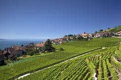 Mening over meer Genève van de Lavaux-wijnstokken Royalty-vrije Stock Foto's