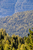 Mening over naaldbossen Stock Afbeelding