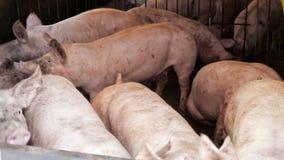 Mening over overvol porks stock footage