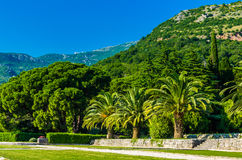 Mening over park en bergen in Montenegro Stock Afbeeldingen