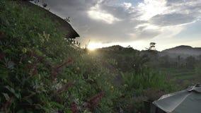 Mening over rijstterrassen van berg en huis van landbouwers Bali, Indonesië stock video