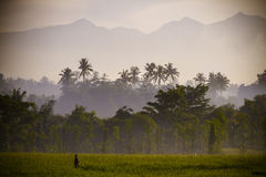 Mening over Rinjani-vulkaan in Lombok-eiland, Indonesië. Royalty-vrije Stock Afbeeldingen