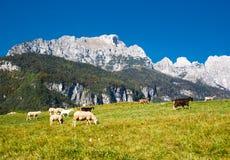 Het landschap van de berg met schapen en geiten Stock Afbeeldingen