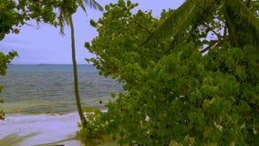 Mening over schitterend blauw turkoois water van Indische Oceaan door groene installatiebladeren stock footage
