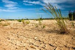 Mening over woestijn met zeldzaam gras Royalty-vrije Stock Afbeelding