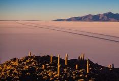 Mening over zonsopgang over eilandincahuasi door zout meer Uyuni in Boli stock foto's