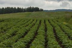 Mening van aardappel-gebied, open plek en hurst over een bovenkant bij Plana-berg Royalty-vrije Stock Foto's