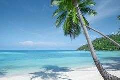 Mening van aardig tropisch strand met palmen Stock Afbeelding