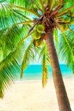 Mening van aardig tropisch strand met sommige rond palmen Stock Afbeeldingen