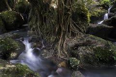 Mening van bergopen plek, rivier en boom met grote wortel Royalty-vrije Stock Afbeelding