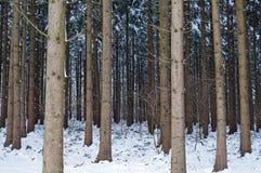 Bos in de winter Stock Foto's