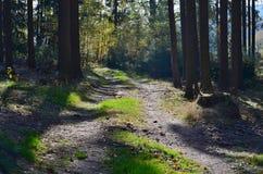 Mening van bosweg, Zuid-Bohemen royalty-vrije stock afbeelding
