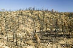 Mening van brandschade van Dagbrand, 2006, langs Lockwood-Valleiweg (dichtbij Pijnboommnt en Frazier-Park) in Las-Aalmoezenieren  Stock Foto