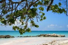 Mening van Caraïbisch Strand in Dominicaanse Republiek stock afbeelding