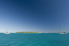 Mening van Dame Musgrave Island in Australië Stock Foto's