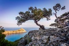 Mening van de baai van de Zwarte Zee met rots en twee kleine winkelhaakbomen Royalty-vrije Stock Afbeeldingen