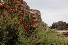 Mening van de bergen met bloemen Royalty-vrije Stock Foto's