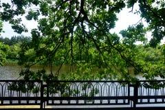 Mening van de boomtakken op de dijk en de tegenovergestelde kust stock afbeeldingen