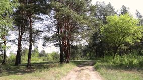 Mening van de bosweg en de wolken stock videobeelden