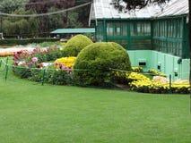 Mening van de de tuin de zeer ontzagwekkende bloem van de OOtywortel Stock Afbeeldingen