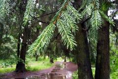 Mening van de groene nette tak na regen royalty-vrije stock afbeeldingen