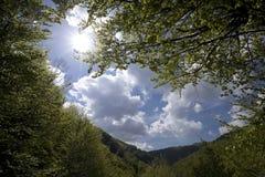 Mening van de hemel in het bos Royalty-vrije Stock Foto's