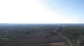 Mening van de de herfst de bos luchthommel in de lente royalty-vrije stock fotografie