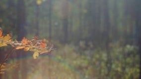 Mening van de herfst Europees bos stock videobeelden