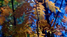 Mening van de herfst Europees bos stock footage