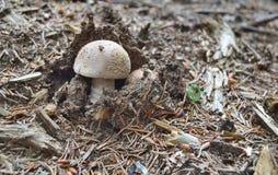 Mening van de herfstpaddestoelen, zuidelijke Bohemen Royalty-vrije Stock Foto's