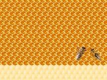 Mening van de het werk bijen op honingscellen Stock Afbeeldingen