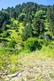 Mening van de heuvel en het groene bos Royalty-vrije Stock Afbeeldingen