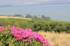 Mening van de Heuvel van Gelukzaligheden aan Dorp Capernaum Stock Fotografie