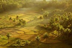 Mening van de Heuvels van de Chocolade filippijnen Stock Fotografie