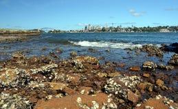Mening van de horizon van Sydney in dag van Woolwich Stock Afbeelding