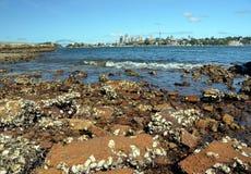 Mening van de horizon van Sydney in dag van Woolwich Stock Foto