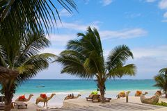 Keniaanse kust Stock Afbeeldingen