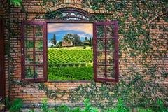 Mening van de Italiaanse wijngaarden Royalty-vrije Stock Fotografie