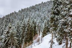 Mening van de kabelbaan van de de skitoevlucht van Hatsvali Khatsvali in de winter Kabels, sneeuw in het bos en berg Ushba Mestia Royalty-vrije Stock Foto's