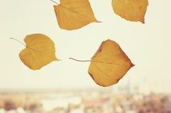 Mening van de kleuren van de herfst Stock Afbeeldingen