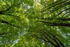 Mening van de kroon van bomen van onderaan royalty-vrije stock foto's