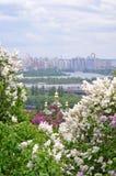 Mening van de Kyiv de Botanische Tuin stock afbeelding