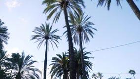 Mening van de lange palmen op een Zonnige dag voorraad Mooie lange palmen in stedelijk milieu stock footage