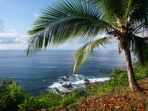 Mening van de oceaan met palmtree royalty-vrije stock afbeelding