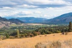 Mening van de Okanagan-Vallei, de groene gebieden, en de stad van Oliver in de herfst stock afbeeldingen