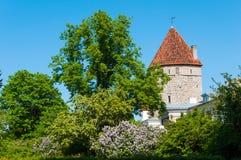Mening van de oude stad van Tallinn, Estland royalty-vrije stock foto's